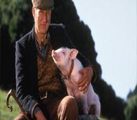 El granjero de Babe: un cerdito valiente, condenado a una semana de cárcel