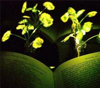 Científicos consiguen que las plantas brillen