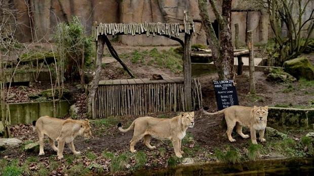 Escapada en un zoológico de Alemania