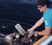 Un viral por salvar el océano