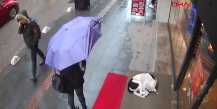 El conmovedor gesto de una mujer hacia un perro callejero