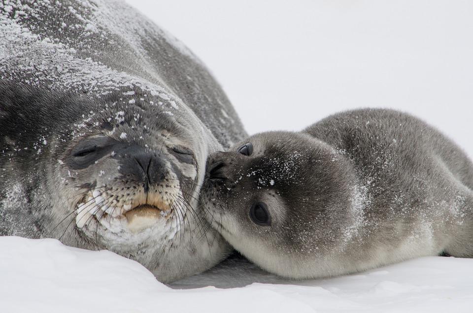 Un invasión de focas hace saltar las alarmas en un pueblo canadiense
