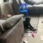 Se encuentran a un perro jugando con el dildo de su vecino