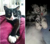 La extraña condición que ha hecho que este adorable gato cambie de color