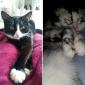 El cambio radical de este adorable gato