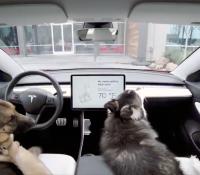 Dejar a tu perro en el coche ya no estará mal visto