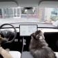Tesla ofrece un nuevo dog mode
