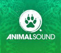 ANIMAL SOUND DESVELA SUS HORARIOS