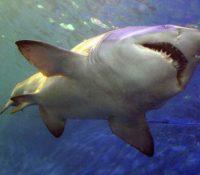 Dos surfistas son atacados por tiburones en Florida