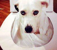 Este perro es muy higiénico