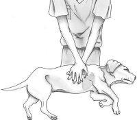 Estudiante de veterinaria le salva la vida a un perro practicando una reanimación cardiopulmonar