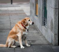 Un perro espera a su dueño fallecido en un hospital de Wuhan durante 3 meses