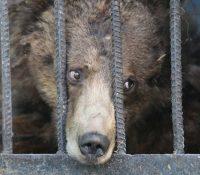 Un zoo británico plantea sacrificar a sus animales por no poder alimentarlos