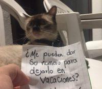 Este gato ocultaba una doble vida a su dueño