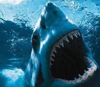 Un bañista caza con sus propias manos a un tiburón en la costa de Delaware