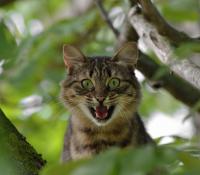 Un gato fuera de control ataca a su familia y deja tres heridos en Palma de Mallorca