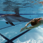 Crean un delfín robótico para sustituir a los reales en parques marinos