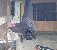 Un murciélago del 'tamaño de un humano' se viraliza en Twitter