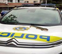 La policía de Alcorcón se lleva una sorpresa al recibir una llamada por la presencia de un cocodrilo