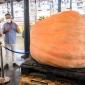 Una calabaza gigante en el Mercado de Almería