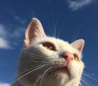 El meme de un gato 'divino' estalla la red