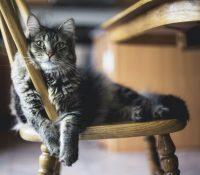 Una gata salva la vida a sus dueños tras detectar un escape de gas