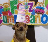 La reacción de un perrito a su fiesta sorpresa de cumpleaños