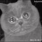 Un gato llora ante la cámara de seguridad al quedarse solo en casa