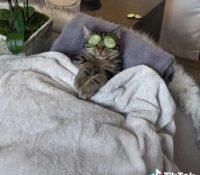 Un gato disfrutando de un día de spa arrasa en TikTok