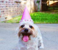 Intenta que su madre prepare una tarta para el cumpleaños de su perro y el resultado se vuelve viral