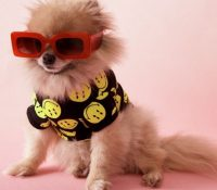 Zara saca su nueva colección de ropa y accesorios veraniegos para perros