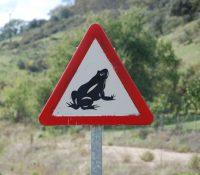 Cortan una carretera para dejar su circulación a ranas y sapos