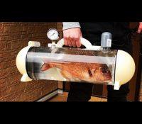 Una empresa japonesa diseña una bolsa para sacar a pasear al pez