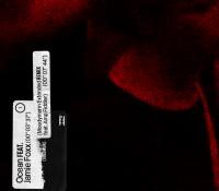 Solomun lanza 'Ocean', su nuevo tema,  junto al actor Jamie Foxx