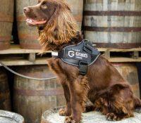 """La empresa de destilería William Grant & Sons contrata a un perro para """"olfatear imperfecciones"""" de la calidad de su whisky"""