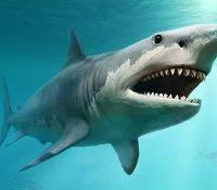 Aparece un tiburón que recuerda al extinto megalodón