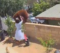 La sorprendente pelea entre una adolescente y un oso para salvar la vida de sus perros