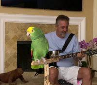 Tico, el loro 'rockanrolero' que triunfa en YouTube