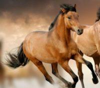 Condenado a tres años y medio de cárcel por poner sonidos de caballos de madrugada
