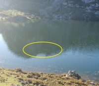 El misterioso animal que ha aparecido en los Lagos de Covadonga